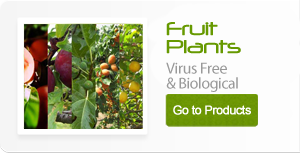 Fruits plants organically-grown and conventional