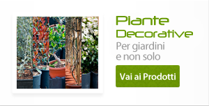 Piante decorative